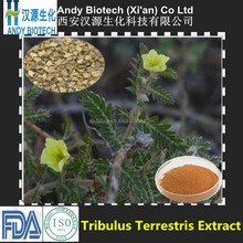 High Standard Saponins 90% Tribulus Terrestris Extract