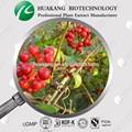 Saw palmetto extracto pliego de condiciones de los ácidos grasos 25%- 45%