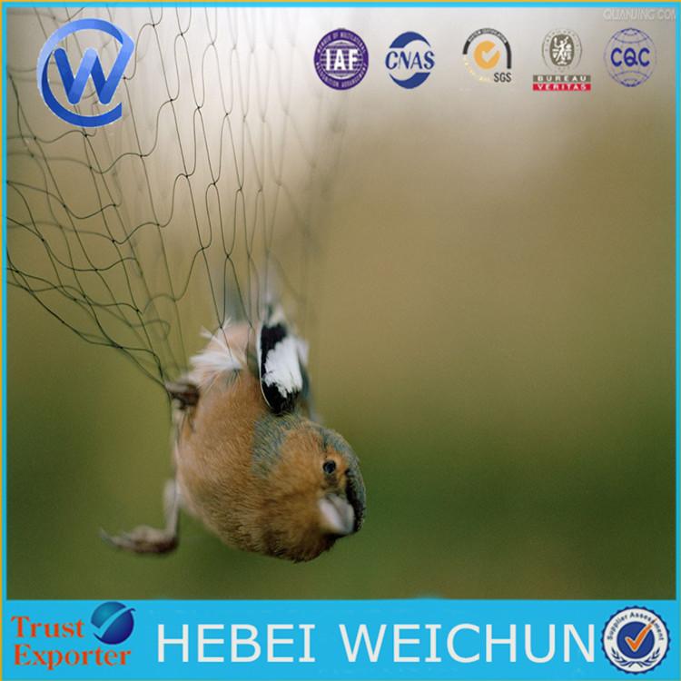 Bird Net trampa/empacadora WRAP Net