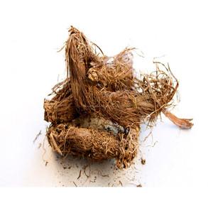 Jatamansi (Nardostachys jatamansi) root