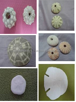 Philippine Denuded Sea Urchins and Sand Dollars