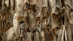 Dried Cod /Variety Stockfish for sale /Grade A Dried StockFish for sale