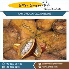 Raw Criollo Cacao Beans