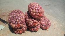 Fresh Red Onion Onions