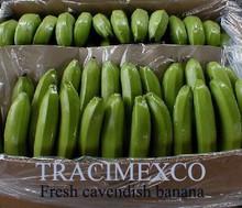 Fresh Cavendish Banana at fair price