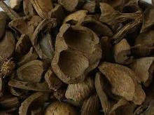 Palm Kennel Shells, Rose Wood, Teak Wood