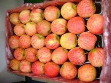 100% Quality Fresh Gala Apples