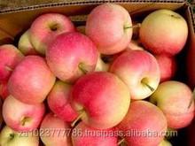Fresh gala apple fruit Hot sales