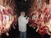Brazilian Frozen Beef Halal Quarter Beef Carcass PRS grade
