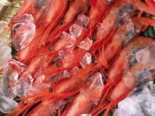 Jumbo Shrimp | Fresh Or Frozen Gulf Shrimp