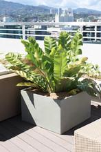 Square Concrete casted planter