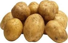 2015 fresh high quality potato exporter
