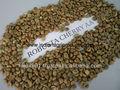 fresco grano de café robusta exportadores