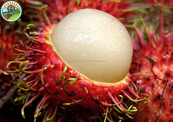 The Best Quality Type 1 and Competitive Price Individual Quick Frozen Fruit from Vietnam Naturally Rambutan