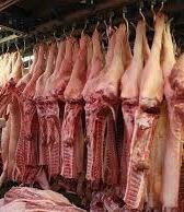 Australian Halal Frozen Beef