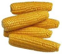 Yellow Corn Protein Animal Feed