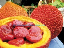 GAC FRUIT FROM VIETNAM