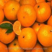Fresh Mandarin Oranges New Fruits high quality GRADE A FOR SALE