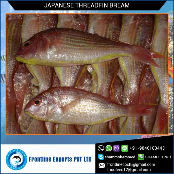 JAPANESE THREADFIN BREAM.jpg