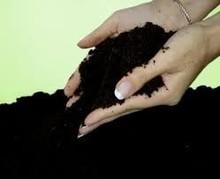 Organic fertilizer Vermicompost biohumus manufacturer by red Californian worm