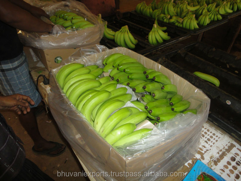 Fresh Bananas/Cavendish/G9 from India!