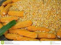 Specification of Yellow maize