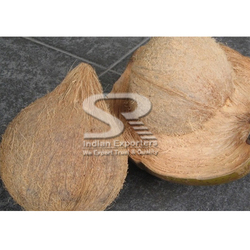 Best Quality Cooking Coconut Supply to Mauritius