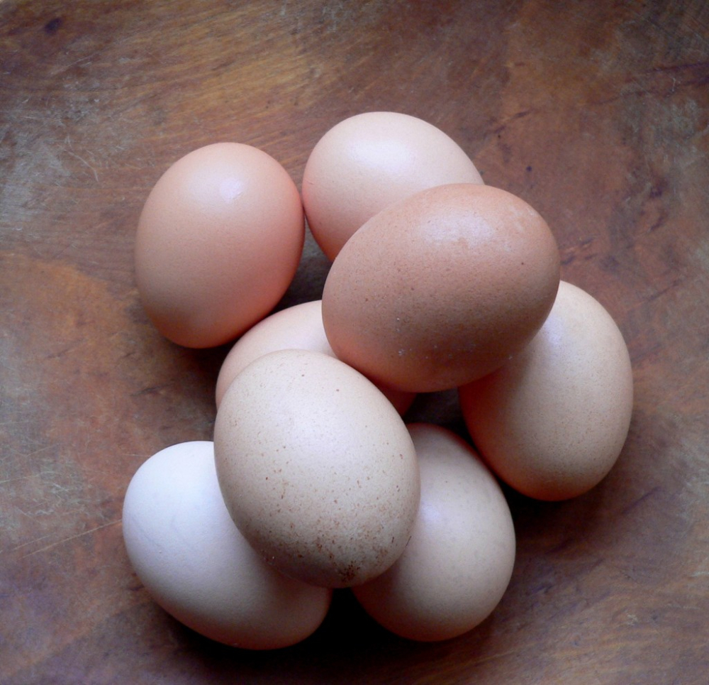 how to tell if fresh eggs are fertilized