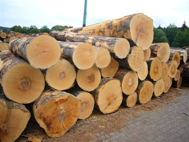 Rubber wood sawn timber buy