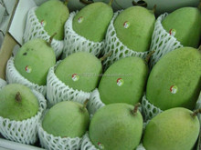 Supply Fresh Mangoes Fruits from Vietnam With Best Price and High Quality