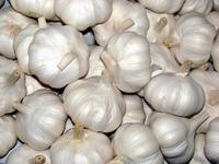 Natural White Fresh Garlic For Sale