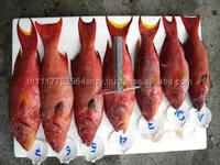 Frozen Fish Red Grouper For Sale