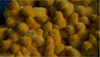 Layer day old Chicks for sale/COMMERCIAL LAYER CHICKENS/NOVOGEN, HY-LINE,LOHMANN