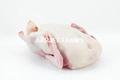 Congelado carne de pato