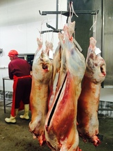 HALAL LAMB/ SHEEP / GOAT CARCASSES