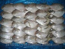 Silver White Pomfret T T Croaker Sea Whole Cut Crab Lobster Hilsa Thread Fin Fish Fresh /Frozen Grade A hot sales