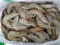 Black tiger king sea prawns