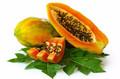 papaye avec le meilleur prix et de haute