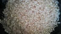 best price good quality broken rice