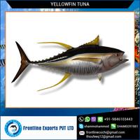 Fresh Yellow Fin Tuna