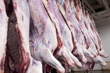 Frozen Beef Meat and Mutton for sale