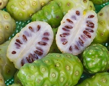 Superior Quality Noni Powder Sale