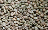 Clean dried green robusta coffee beans 2015