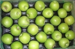 FRESH GREEN APPLE EXPORTERS FROM SOUTH AFRICA