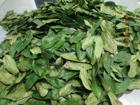 dried soursop leaves for anti cancer treatment from Viet Nam