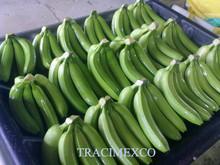 Fresh Cavendish Banana from Vietnam