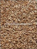 Rye Grass Seed Hybrid