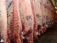 Frozen camel carcass meat