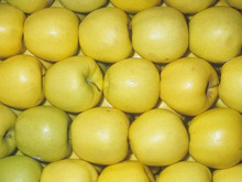FRESH GOLDEN DELICIOUS APPLE FROM SOUTH AFRICA