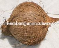 Fresh organic Mature coconut